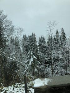 Waldbaden-Shinrin Yoku  im Raum: Hohenlohe / Franken / Unterland / Schwäbisch Hall