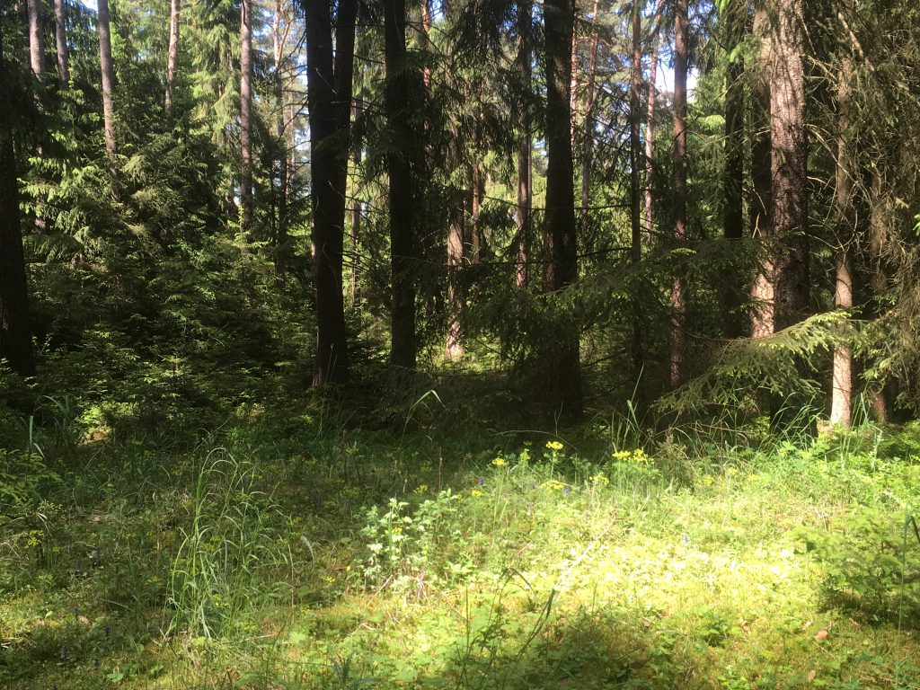 Waldbaden – Waldtherapie in Amberg und Kümmersbruck