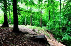 Waldbaden in Heilbronn mit Siegfried Hain